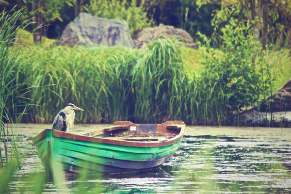 heron-in-a-boat-dave_meier.jpg